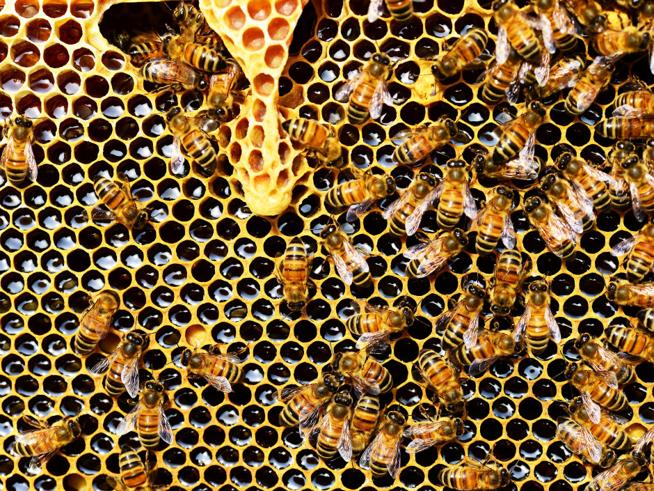 Why Everyone Should be Reaping the Amazing Health Benefits of Bee Propolis (Via Primal Eye Magazine)